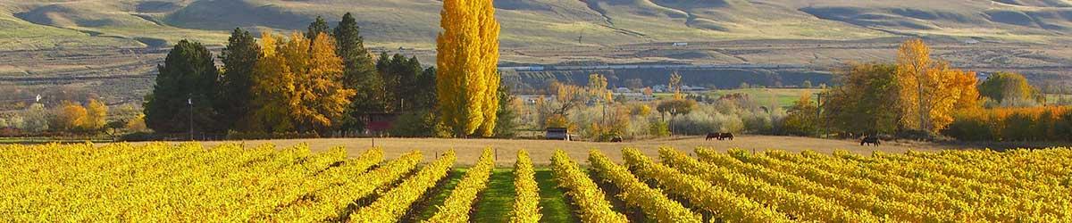 maison bleue vineyards